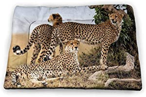 Nomorer Extra Large Pet Placemat Africa Waterproof and Machine Washable Cheetahs Mother and Two Young Baby Looking for Food Dangerous Exotic Animals 52