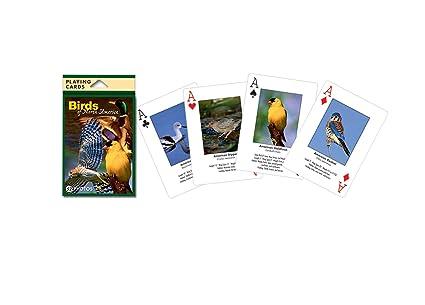 Amazon.com: Impacto Photographics imp144ply Juego de cartas ...