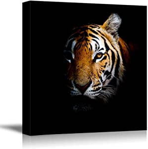 "Canvas Prints Wall Art - Tiger Head in Dark | Modern Home Deoration/Wall Decor Giclee Printing Wrapped Canvas Art Ready to Hang - 24"" x 24"""