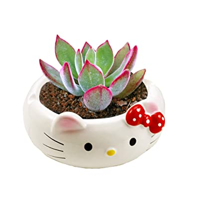 YOURNELO Cute Ceramic Cartoon Character Plant Flower Pot Succulent Planters Vase (Hello Kitty): Garden & Outdoor