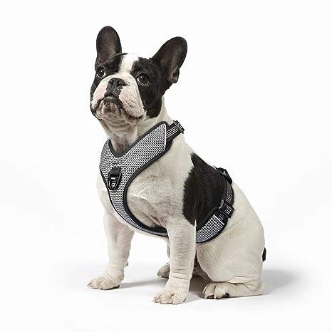 Arnés para chaleco de perro: Amazon.es: Productos para mascotas