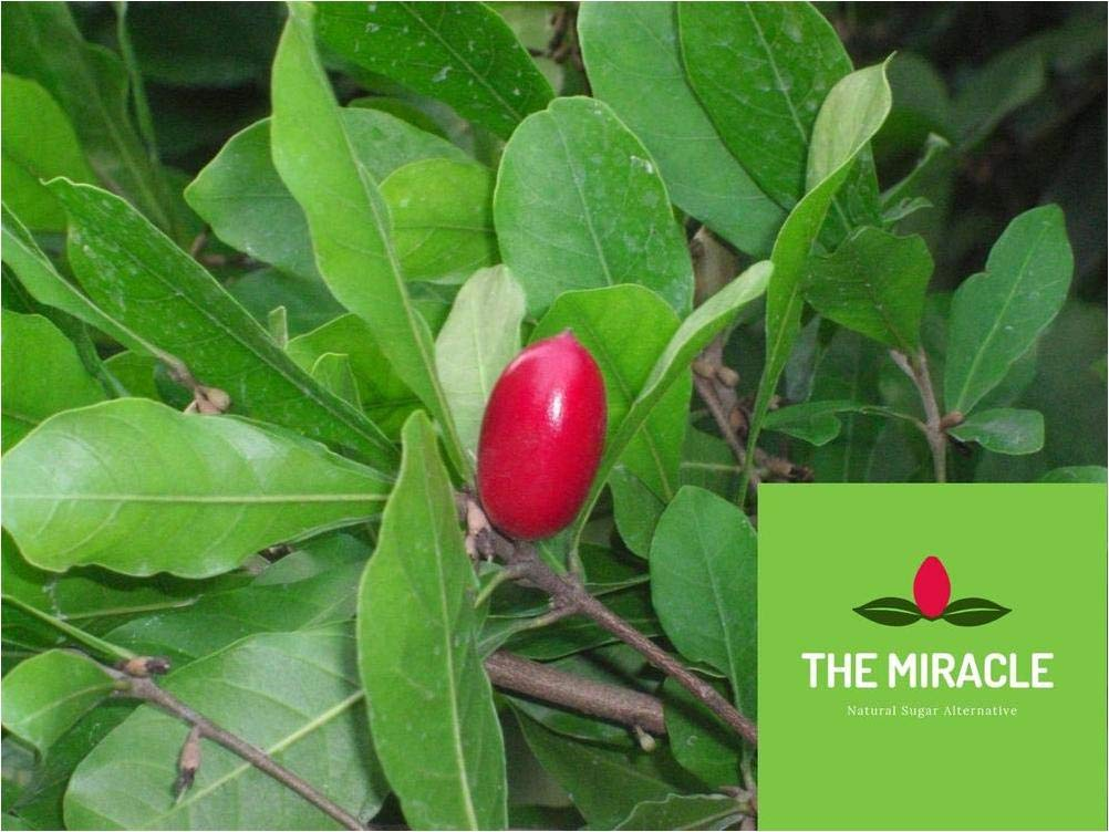 4 Miracle Fruit/Berry Plants Synsepalum dulcificum by Miracle Fruit