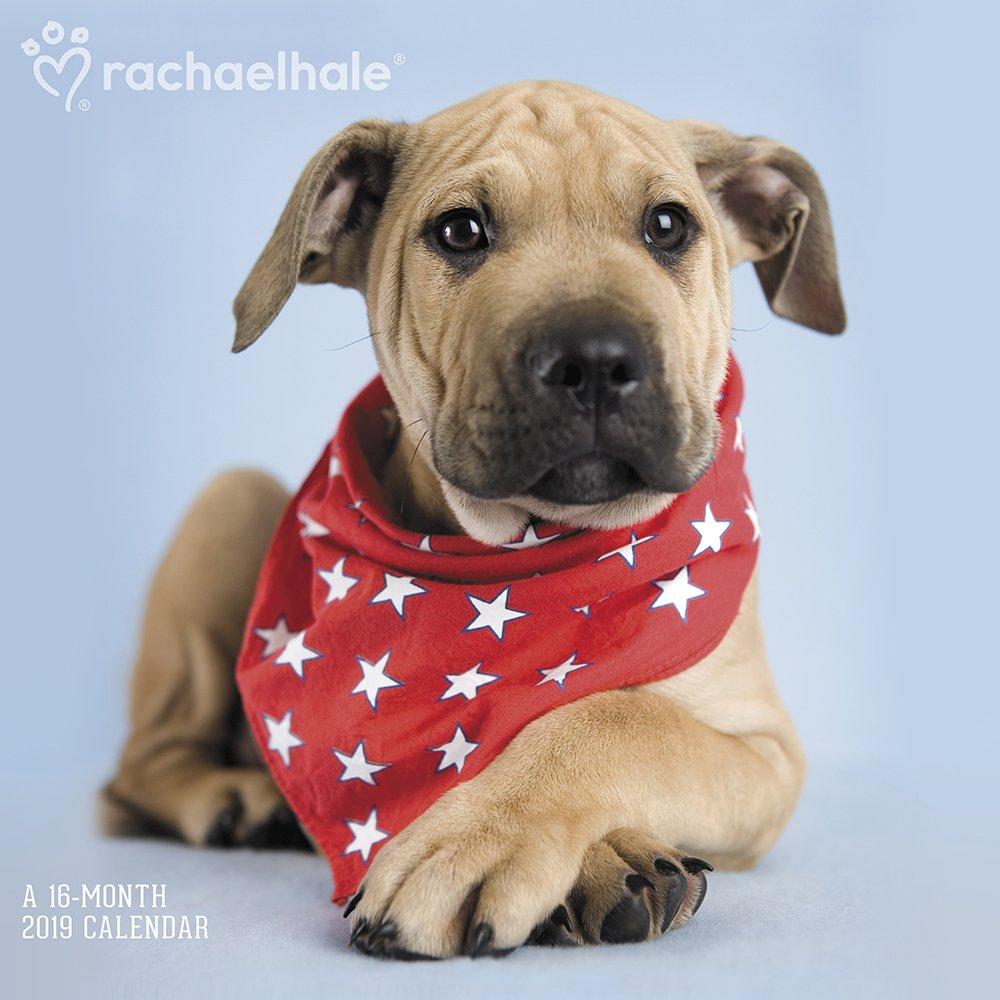 Download Rachael Hale Dogs Wall Calendar (2019) PDF