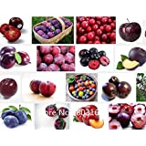 Professional Packs, 20 Seeds/Pack, Delicious Round Plums Fruit Tree Seeds + Good Quality + Mysterious Gift Garden Bonsai Plant