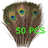 50pcs Natural Peacock Tail Feathers (Big Eyed) about 26-30cm