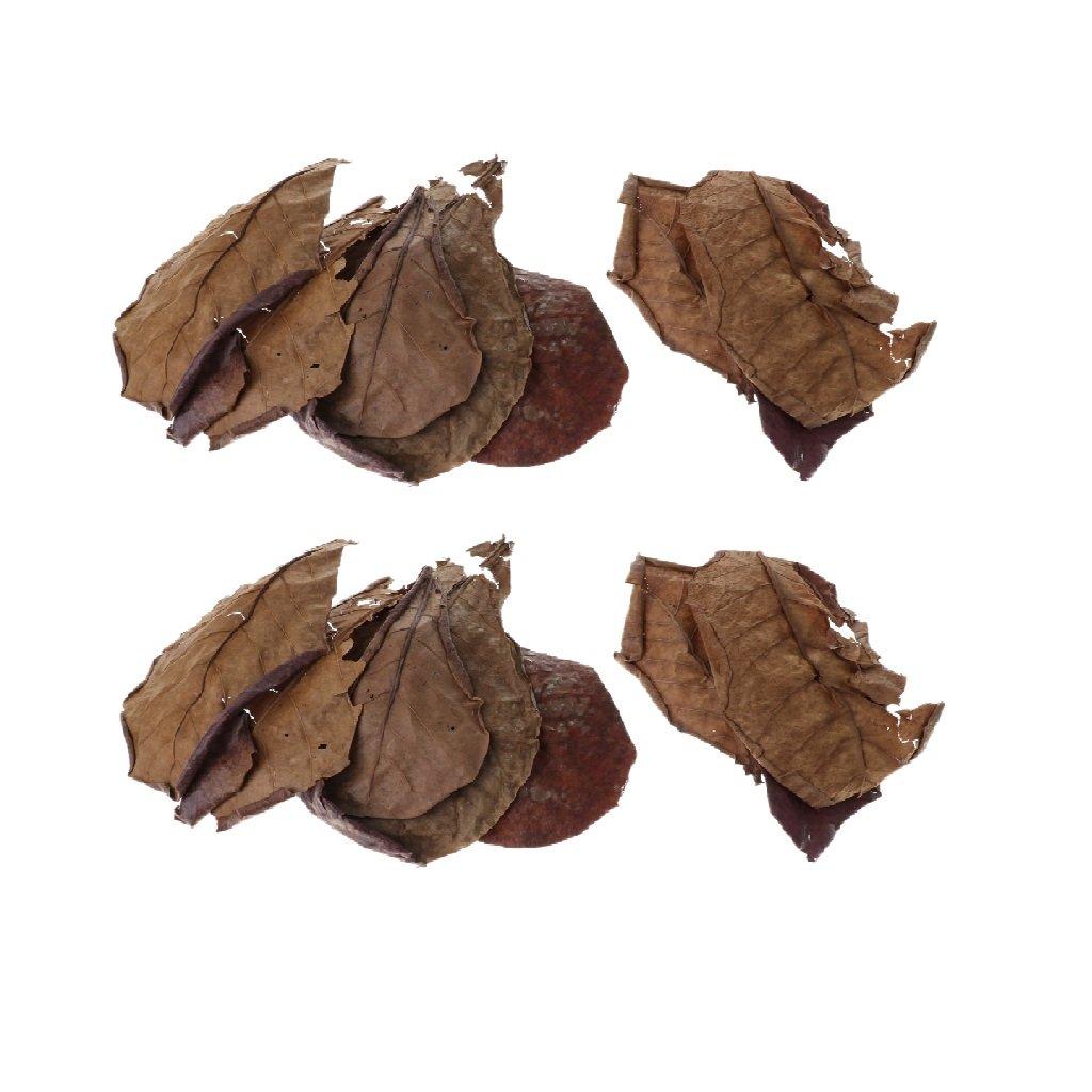 perfk Hojas de Almendra India Hoja Beneficiosa para Camarones Betta Peces Fácil de Usar Tropicales - 30 Piezas