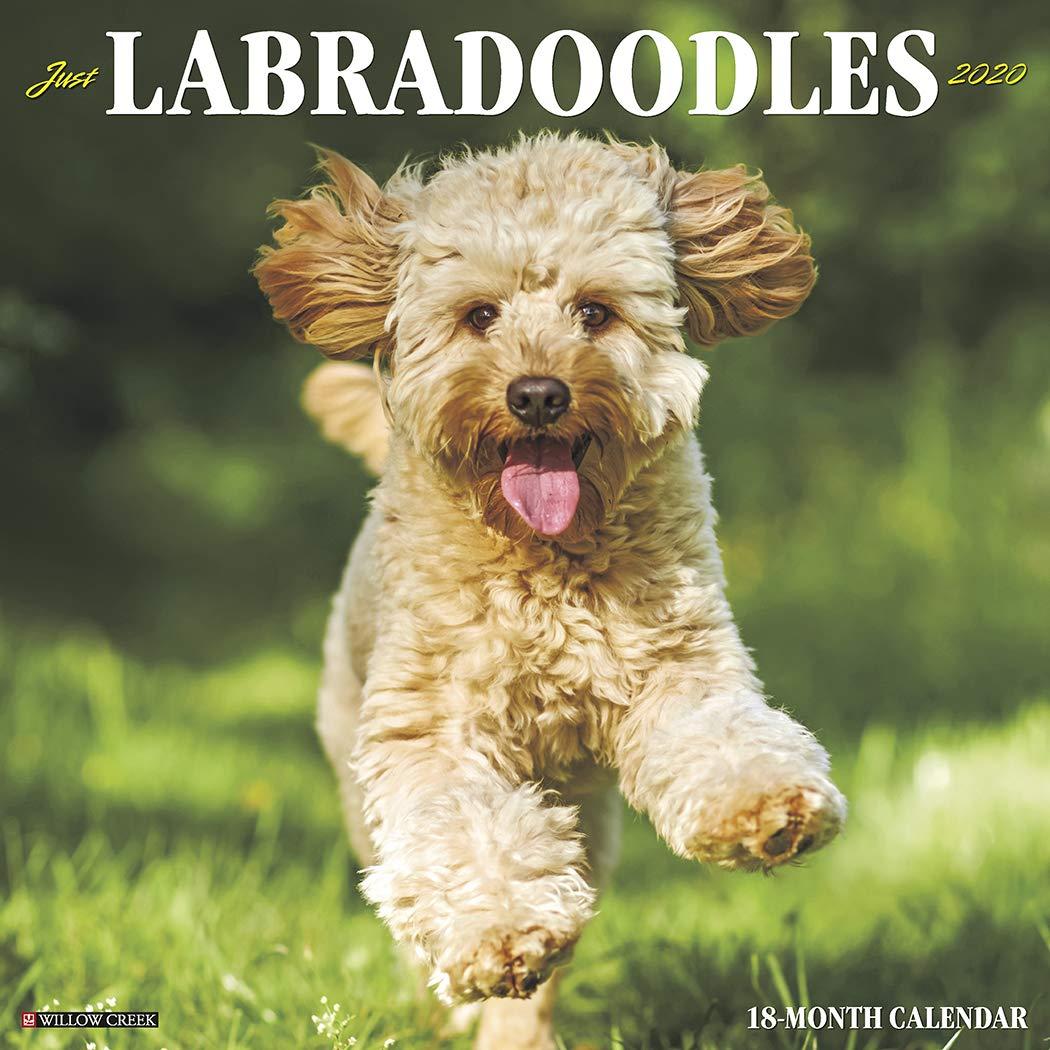 Just Labradoodles 2020 Wall Calendar  Dog Breed Calendar
