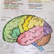 El cerebro humano. Libro de trabajo (Ariel): Amazon.es