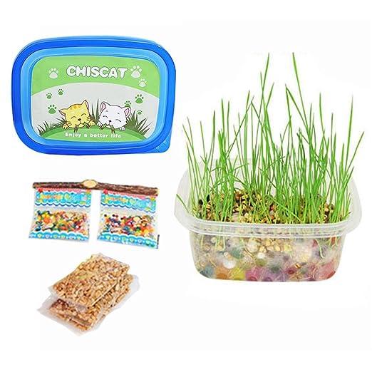 KOBWA Mini Orgánico Kit de cultivo de pasto de trigo - Súper fácil de cultivar Hierba de gato Semillas con Bolas de cristal y Plantador, Natural Remedio de ...