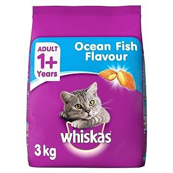 Persian cat food price in india