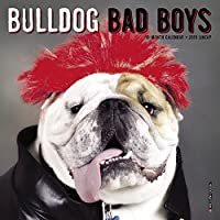 Bulldog Bad Boys Mini 2019 Wall Calendar (Dog Breed Calendar)