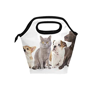 Bolsa de almuerzo para gatos y perros de JSTEL con bolsa para el almuerzo, contenedor