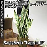 【ギフトに最適!】サンセベリア(サンスベリア・トラノオ)10号(1尺)鉢・鉢カバー付き【観葉植物】