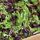 David's Garden Seeds Lettuce Five Star Greenhouse Mix D192A (Multi) 500 Open Pollinated Seeds