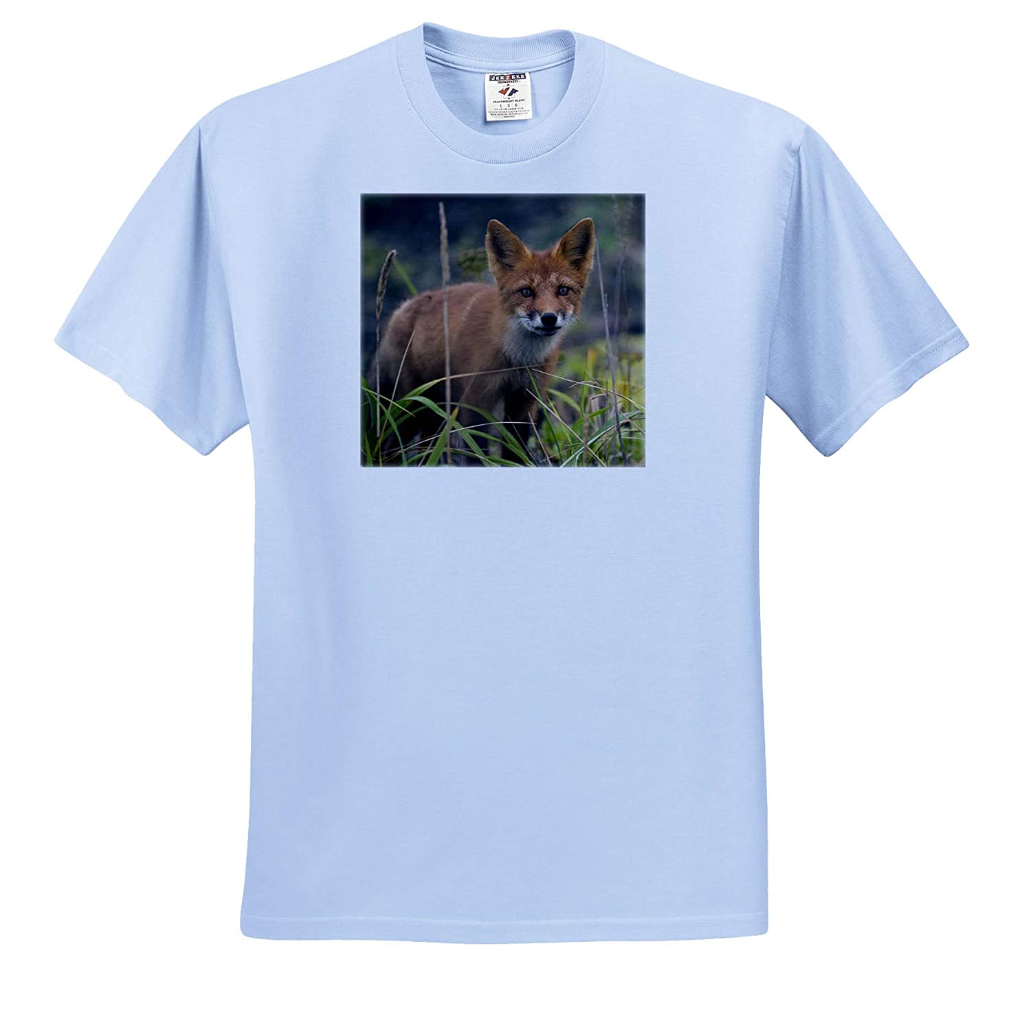 Atlasova Island Russia ts/_313861 Wild red Fox in Tall Summer Grass 3dRose Danita Delimont - Adult T-Shirt XL Foxes