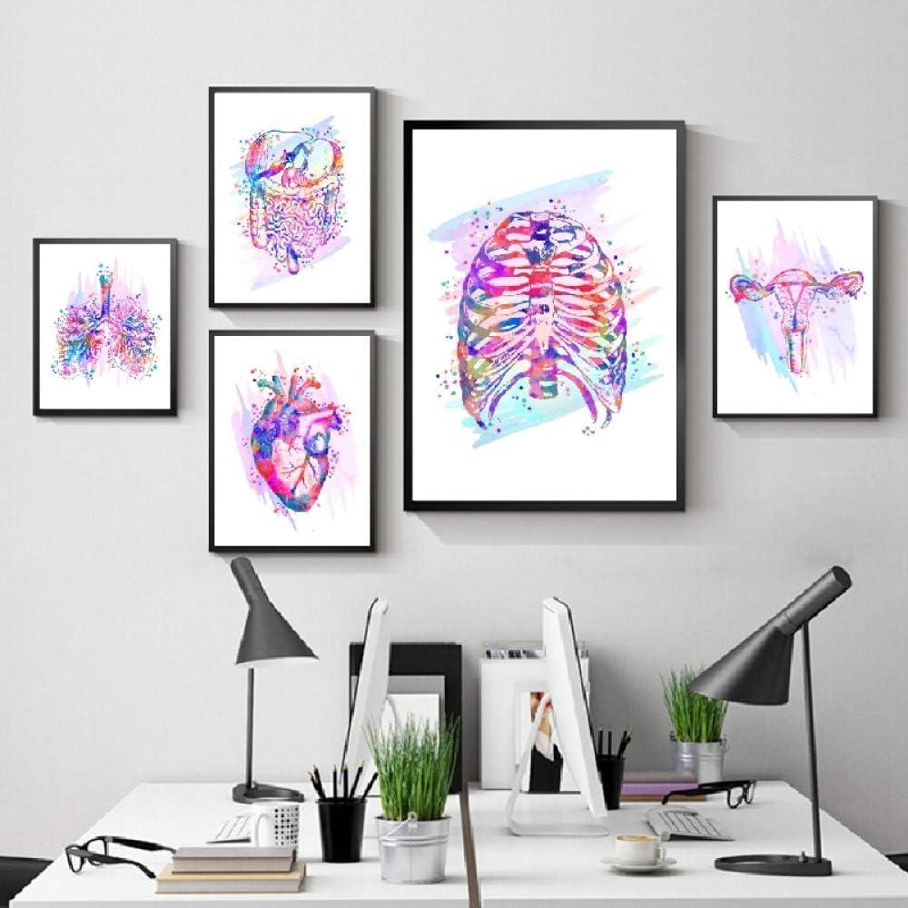 Impresión de anatomía Órganos anatómicos Cartel Cerebro Corazón Pulmones Hígado Pelvis Caja torácica Anatomía Humana Arte Clínica Pintura Arte de la Pared Decoración m 5 Piezas