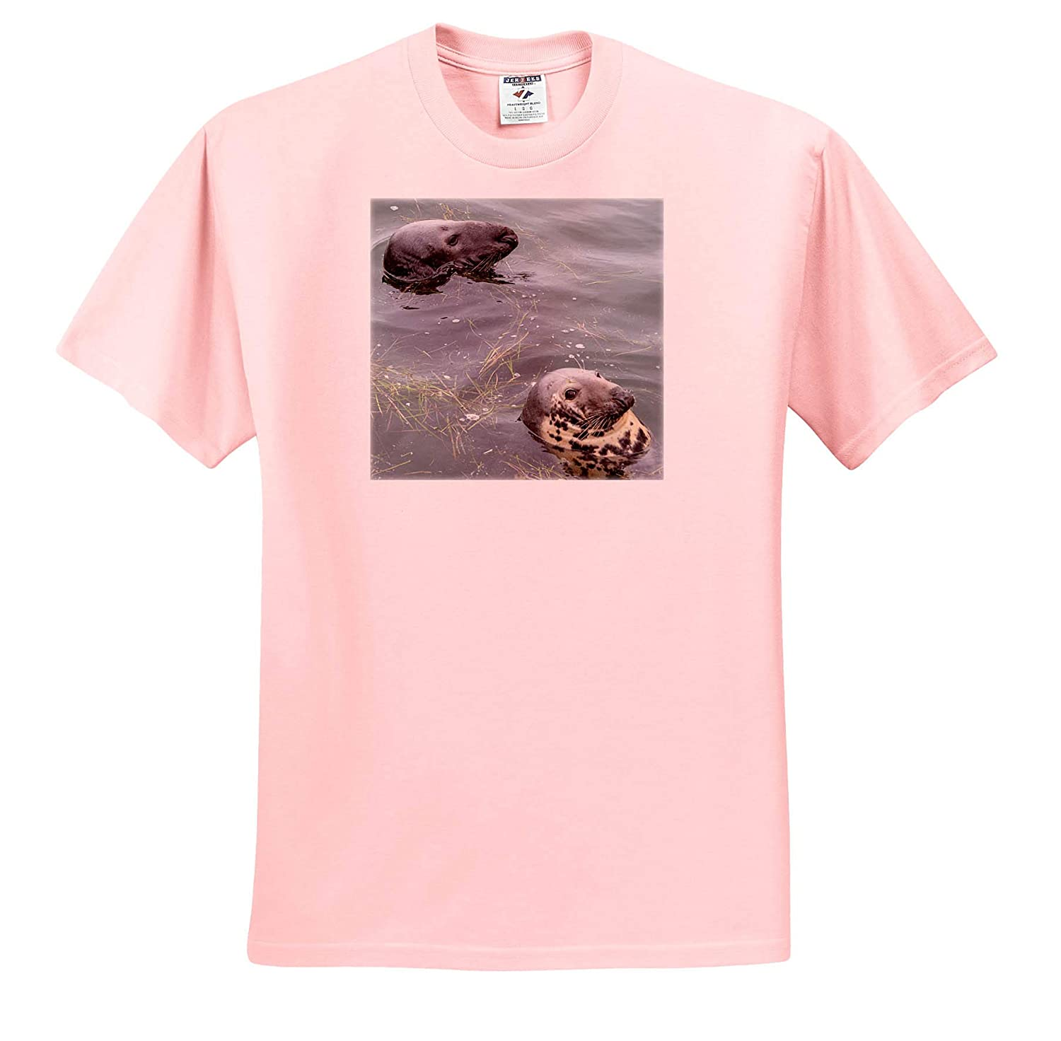 3dRose Roni Chastain Photography T-Shirts Harbor Seal and Gray Seal