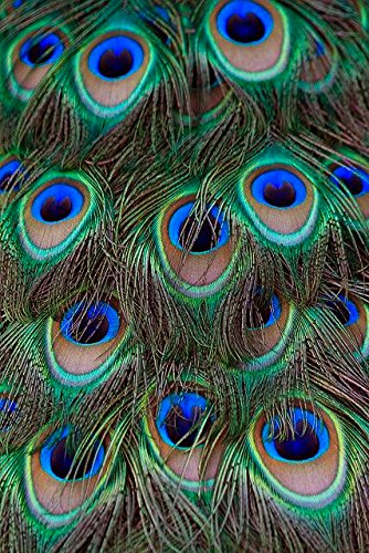 Unique Diy Costumes Halloween (Piokio 100pcs Natural Peacock Feathers In Bulk for Wedding Christmas Halloween Decorations 10