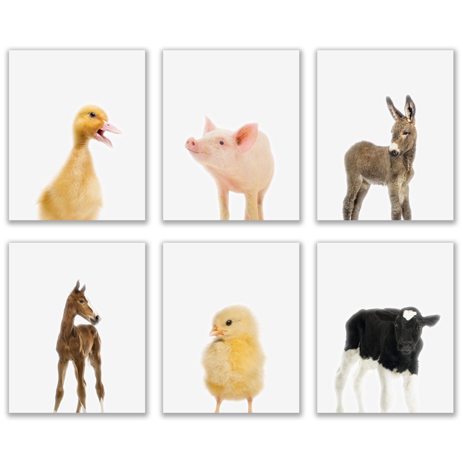 Crystal Baby Farm Animals Poster Prints - Set of 6 (8x10) Adorable Furry Barn Portraits Wall Art Nursery Decor - Calf (Cow) - Chick (Chicken) - Donkey - Foal (Horse) - Duckling (Duck) - Piglet (Pig)