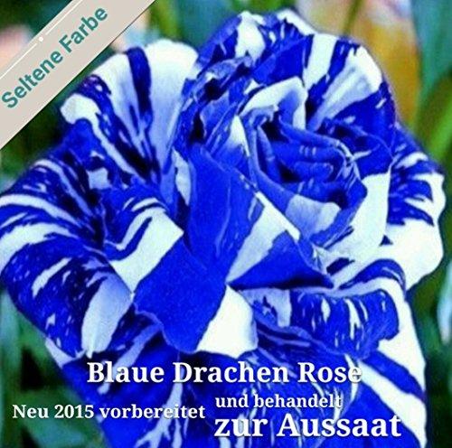20x Blaue Drachen Rose weiß - blaue Streifen Samen Pflanze Rarität Blumen Rosen #112