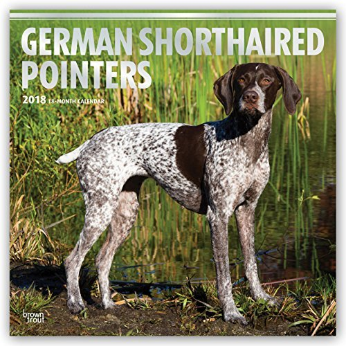 German Shorthaired Pointers 2018 12 x 12 Inch Monthly Square Wall Calendar with Foil Stamped Cover, Animals Dog Breeds