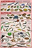 Amphibians and Reptiles Laminated Educational Science Classroom Chart Print Poster 24x36