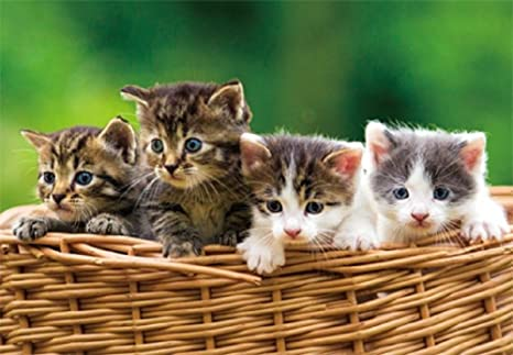 3 D Vista Tarjeta Gatos en cesta gatito Postal Motivo tarjeta Holograma tarjeta Animales Mascotas Gato