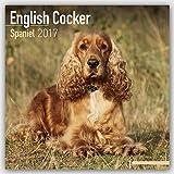 Cocker Spaniel Calendar 2017 - English Cocker Spaniel - Dog Breed Calendars - 2016 - 2017 wall calendars - 16 Month by Avonside