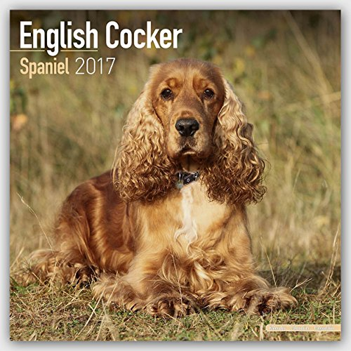Cocker Spaniel Calendar 2017 - English Cocker Spaniel - Dog Breed Calendars - 2016 - 2017 wall calendars - 16 Month by Avonside (Cocker Spaniel Calendar)