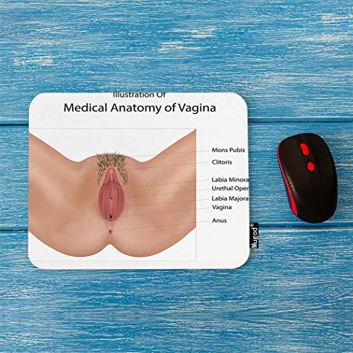Mugod Vagina Mouse Pad Anatomy of Vulva Vagina Medical Illustration Decor Gaming Mouse Pad Rectangle Non-Slip Rubber Mousepad for Computers Laptop 7.9x9.5 Inches ()