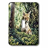 3dRose Andrea Haase Animals Illustration - Wildlife Fox Illustration - Light Switch Covers - single toggle switch (lsp_282464_1)