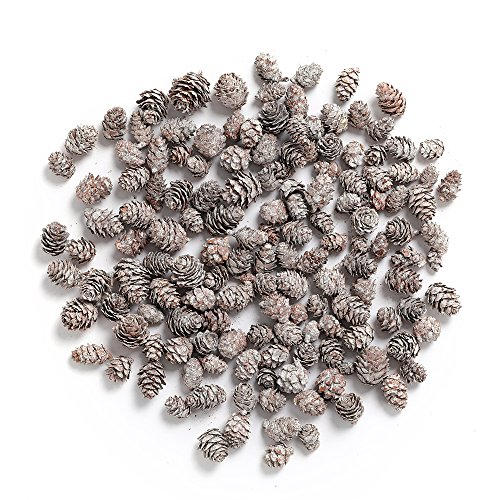 - Byher Pine Cones, Mini Pinecones in Bulk for Crafts, 8OZ, Pack of 110 (White)