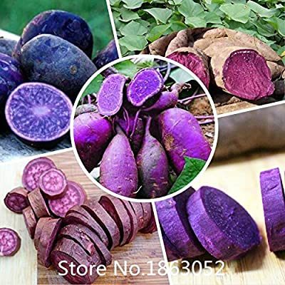 .100 Seeds/Pack.Annual Fruit and Vegetable Seeds Molokai Purple Sweet Potato.DIY Home Garden&Bonsai Plant Seeds Rare : Garden & Outdoor