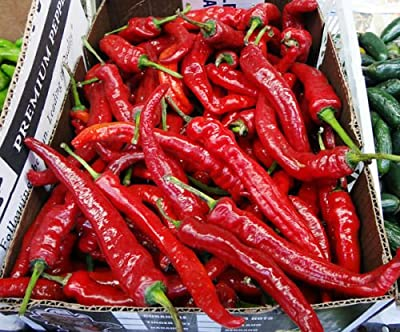50 Organic Korean Hot Pepper Chili Seeds Non-gmo for Kimchi Spicy Red