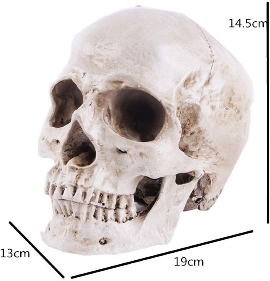 19 HKDJ-Resina Testa di Scheletro Modello,Creativo Cranio Figurina Home Office Decor Formazione Medica,Divertente Decorazione da Scrivania,12 11CM