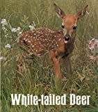 img - for White-tailed deer (Ranger Rick's best friends) book / textbook / text book