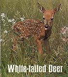 White-Tailed Deer, Anne LaBastille, 0912186003