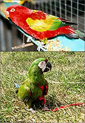 The AVIATOR El Arnés de Aves: Pequeña Verde: Amazon.es: Productos ...