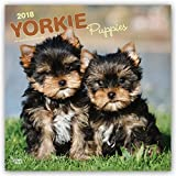 Yorkshire Terrier Puppies 2018 12 x 12 Inch Monthly Square Wall Calendar, Animals Small Dog Breeds Terrier Puppies (Multilingual Edition)