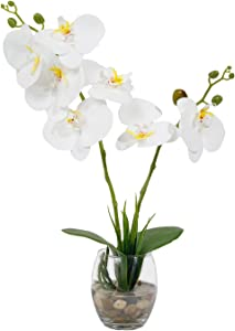 Faux Orchid Plants White Orchids with Glass Vase Phalaenopsis Orchid Artificial Orchid Flowers Faux Orchid in Glass Pot Orchid Decorations for Home Decor Office Kitchen Table Centerpiece
