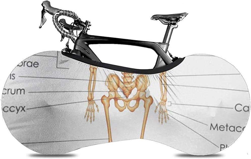 Cubierta de Rueda de Bicicleta, Cubierta de Bicicleta - Anatomía Educación médica Tabla de biología Diagrama Esqueleto Humano Hueso del Cuerpo