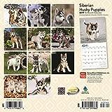 2019 Siberian Husky Puppies Mini Wall