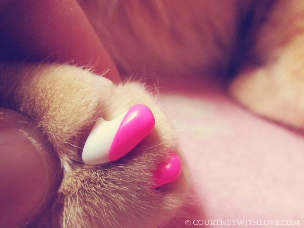 Amazon.com : Kitty Caps, Small Clear: Cat (6-8lbs) Soft Feline Nail ...
