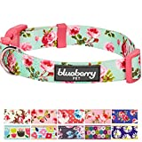 "Blueberry Pet 11 Patterns Spring Scent Inspired Floral Rose Print Turquoise Dog Collar, Medium, Neck 14.5""-20"", Adjustable Collars for Dogs"