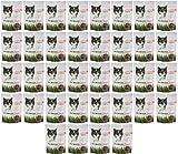Bell Rock Semi-Moist Cat Treats Savory Salmon 7.75Lbs (36 x 3oz)