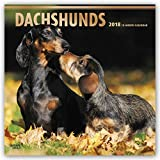 Dachshunds 2018