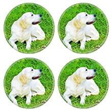 MSD Round Coasters IMAGE 22997221 Stain Resistance Kit Kitchen Table Top Desk C A young beautiful golden retriever sitting happily on the lawn Known for their