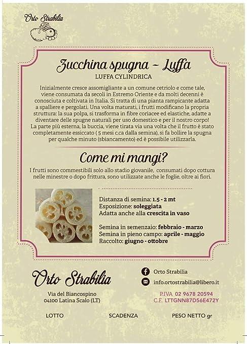 Fiori 04100.Amazon Com Courgette Loofah Sponge Luffa Cylindrica Rare Seeds