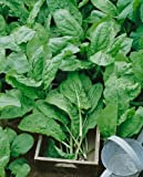 Sorrel, Large Leaf (Rumex acetosa) Seeds - Rumex Acetosa - 0.5 Grams - Approx 450 Gardening Seeds - Vegetable Garden Seed