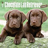 Labrador Retriever Puppies, Chocolate 2017 Square (Multilingual Edition)